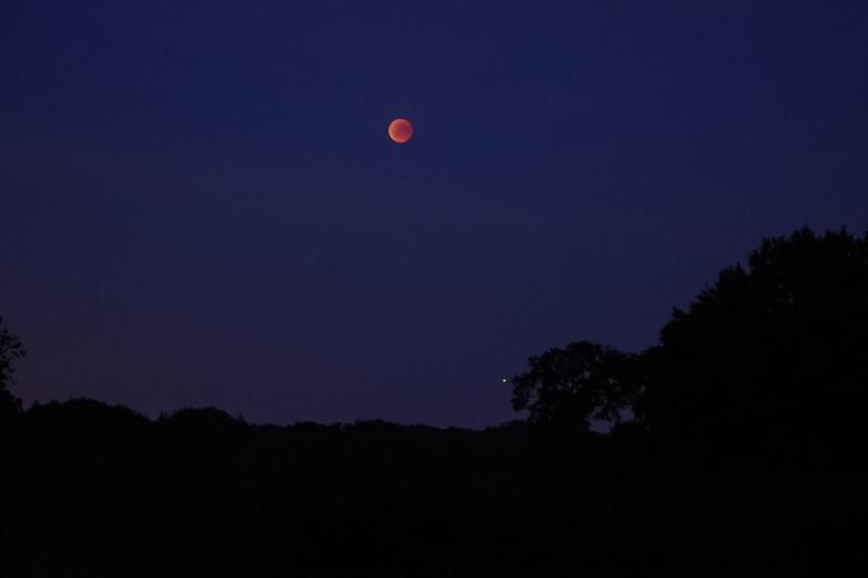 Maan schijnt boven de bomen